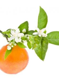 หัวน้ำหอมกลิ่น Orange Blossom