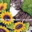 กระดาษสาพิมพ์ลาย สำหรับทำงาน เดคูพาจ Decoupage แนวภาพ แมวน้อยใต้แสงอาทิตย์ อยู่ในเงาของดอกทานตะวัน thumbnail 1